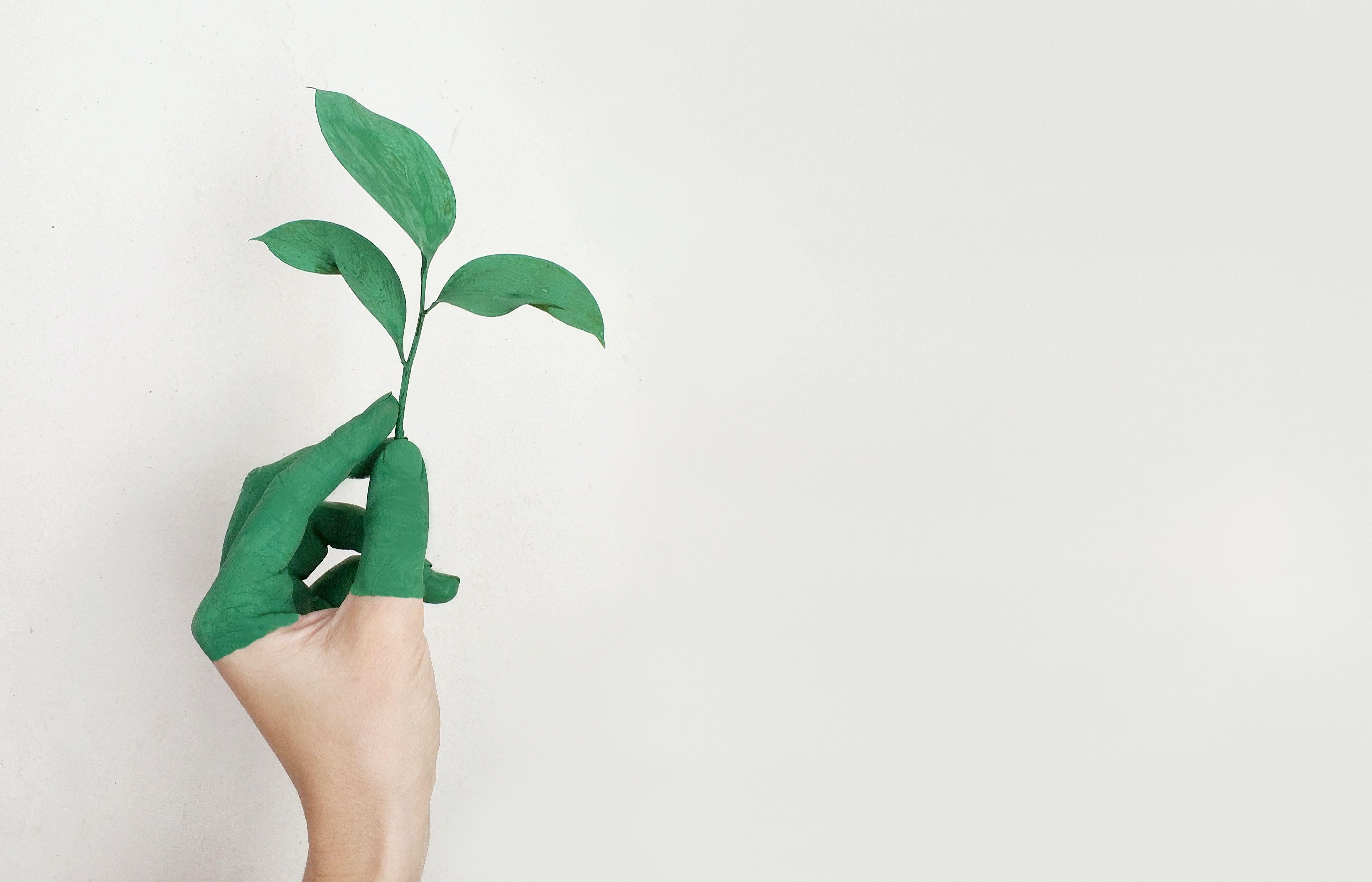 Meio ambiente, sustentabilidade